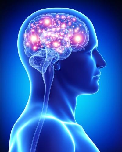 brain2 (1).jpg